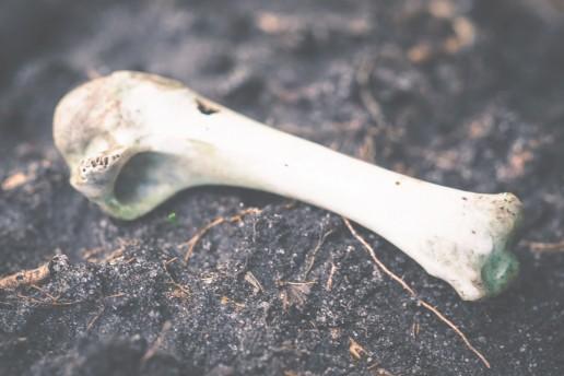 Cinco cosas que no sabías de Atapuerca