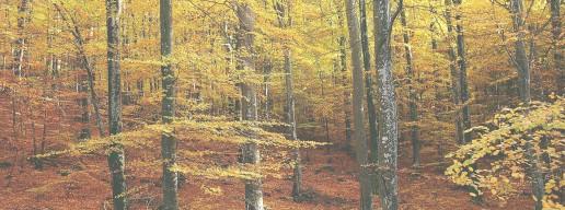 Los mejores paisajes de otoño en Burgos