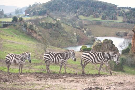 Disfruta este verano del Parque Natural de Cabárceno
